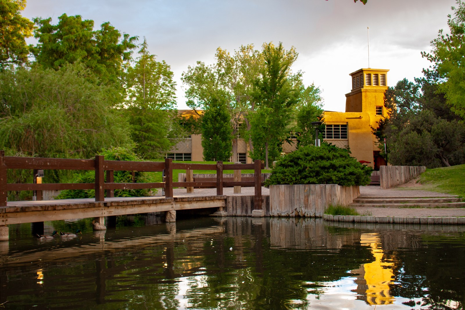 Pond on the campus of the University of New Mexico